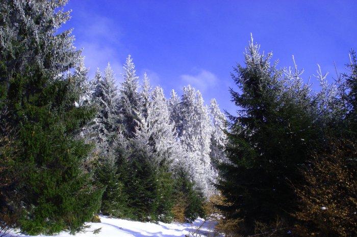 Zima, fotograf: matúš michalko, tagy: les, zima, sneh, stromy, hory